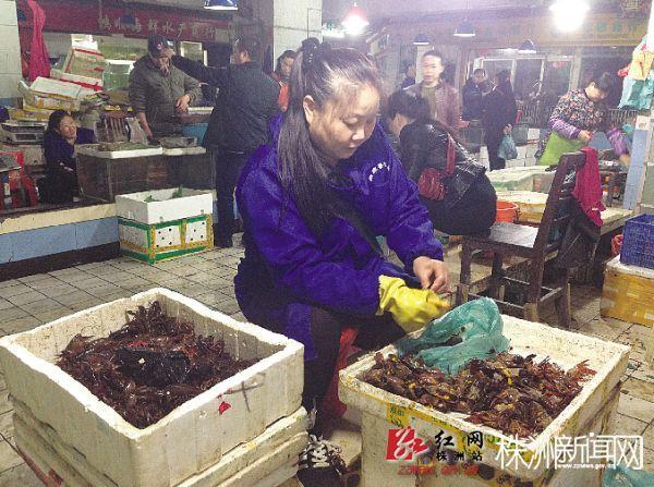 """湖南株洲:小龙虾""""抢鲜""""上市,最贵卖到45元/斤"""