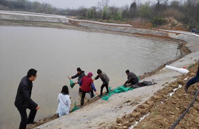 江西九江湖口县现代渔业项目基地进行小水面精养中华绒螯蟹