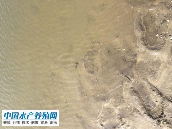 兴化资深老蟹农分享24年大闸蟹养殖经验