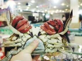 """福建福州一男子花83元买只梭子蟹 两根橡皮筋""""花""""了44元"""