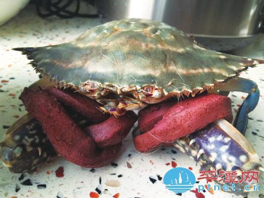 捆螃蟹的绳子竟比螃蟹本身还贵  福建平潭超市普遍捆粗绳否则不卖