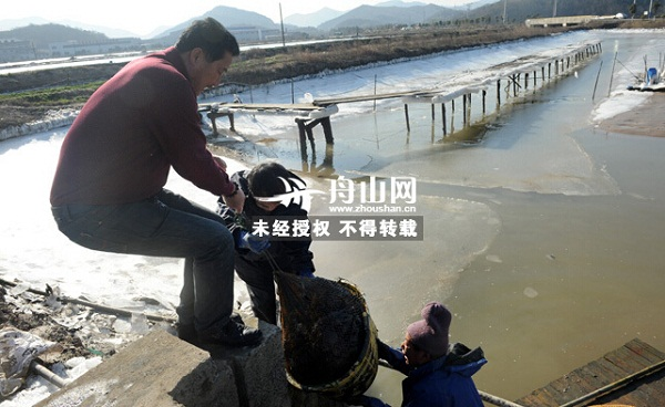 浙江舟山六横养殖梭子蟹陆续起捕 蟹价虽高但蟹的产量很低