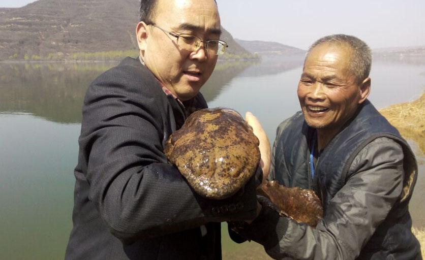 陕西省千河流域凤翔段发现野生大鲵