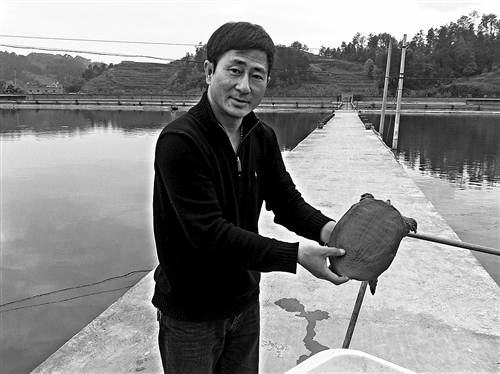 """重庆南川耀康农业公司:高端特种养殖 """"鳖""""出的""""钱景"""""""
