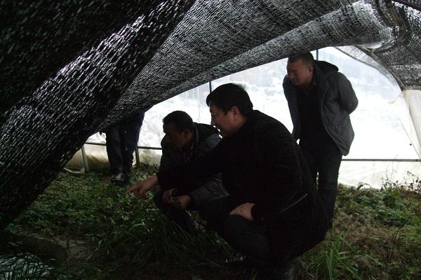 云南昭通市威信县农业局局长邓兴钊调研特色千赢电子游戏平台石蛙养殖