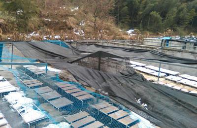江西九江永修县尚吉石蛙生态养殖场因雪灾损失严重