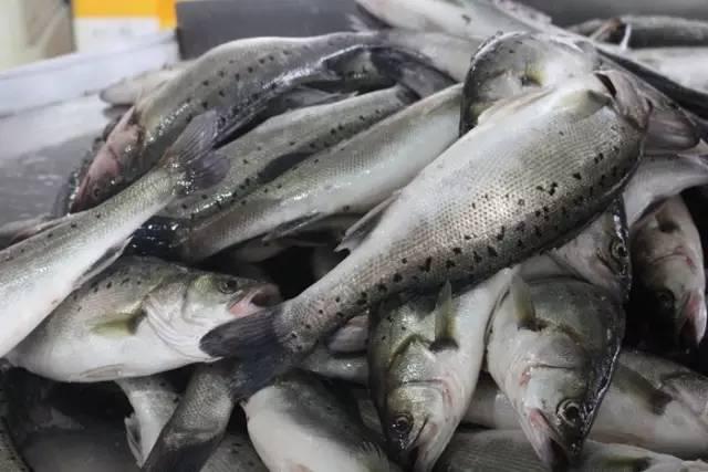 这家公司如何一跃成为珠海海鲈鱼行业的龙头企业