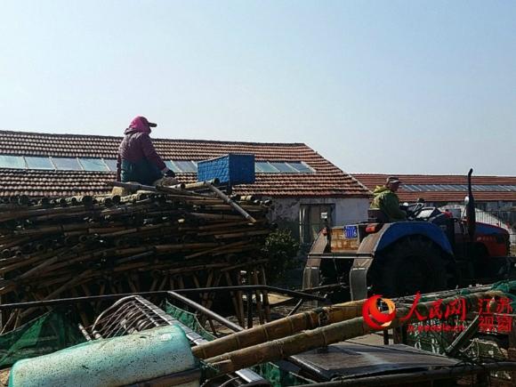 江苏南通如东2万多亩紫菜面临绝收 渔民损失惨重