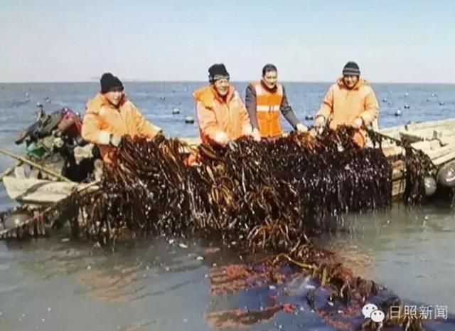 """山东日照市加快建设""""海上菜园"""" 优化渔业产业结构"""