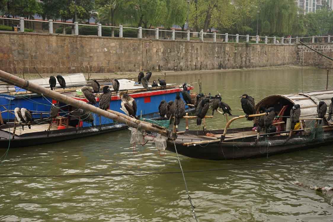 湖南常德市武陵区再次查获一批非法电捕渔船