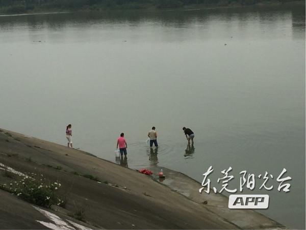 广东东莞:市民河流中捉鱼 景象十分危险