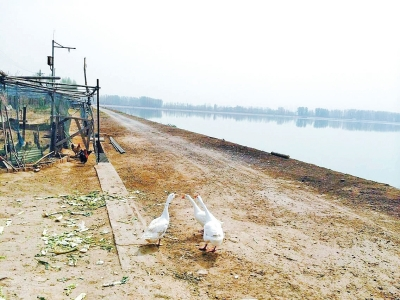 河南郑州石佛沉沙池边有人养鹅钓鱼 市民忧心水源污染