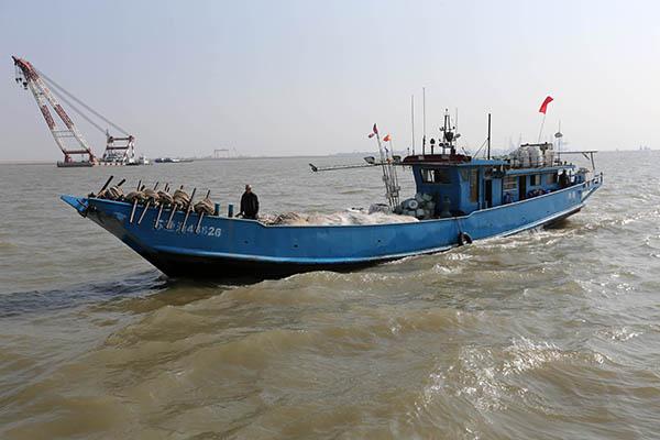 """上海海警严管重罚 刀鱼能否逃脱""""天罗地网""""?"""