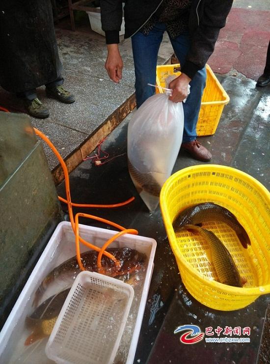 """四川巴中曾口禁渔期捕鱼频繁 渔政部门称""""管不过来"""""""