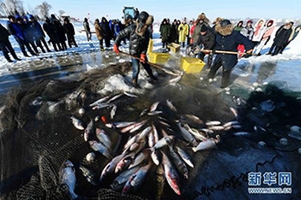 """黑龙江哈尔滨渔民冒着零下20度""""极寒""""冬捕 从网中捞鱼"""