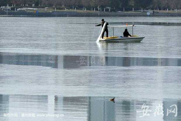 安徽合肥市天鹅湖里大白天城管偷鱼? 回应:打捞偷鱼人下的网