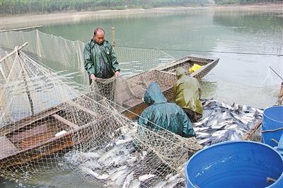 """广西来宾合山市罗山镇水库上演丰收""""捕鱼季"""",一天能打鱼3万斤"""