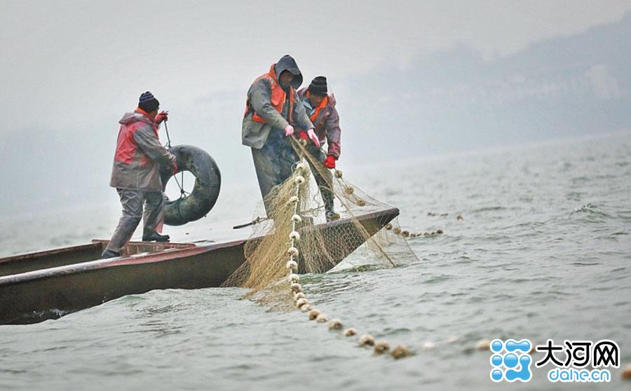 河南洛阳陆浑水库冬捕开始 第一网出鱼近万斤