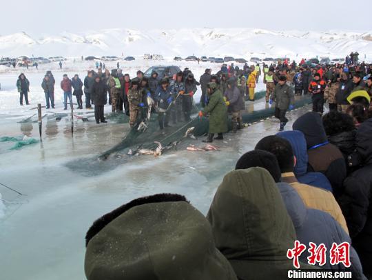 新疆北屯:冬捕文化旅游节 15公斤草鱼拍卖18万