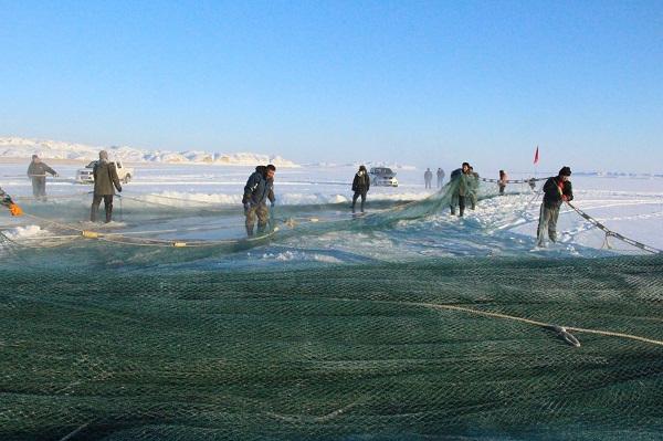 新疆北屯丰庆大峡谷试捕130米鱼网捕鱼30吨产量