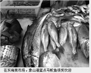 """每公斤200元 不少浙江宁波市民不惜花大价钱尝""""鰆鯃"""""""