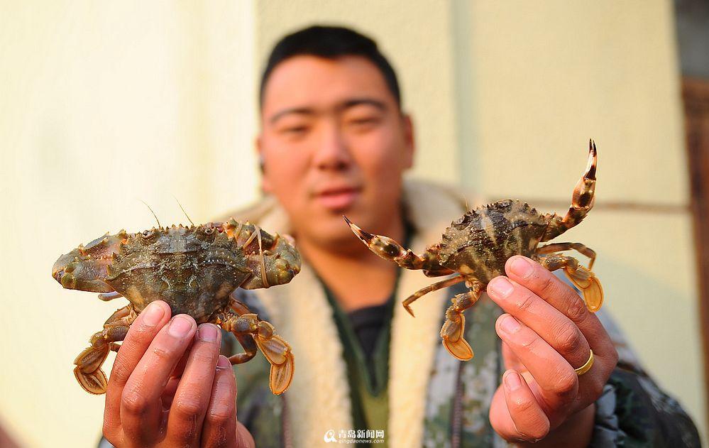 山东青岛本地石夹红螃蟹涨至60元/斤 上岸被疯抢