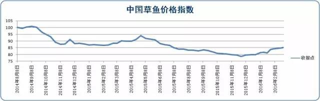 受脆肉鲩投苗带动,广东中山五斤以上草鱼单月最高涨八毛