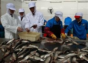 福建泉州鱼罐头热销加纳等6国