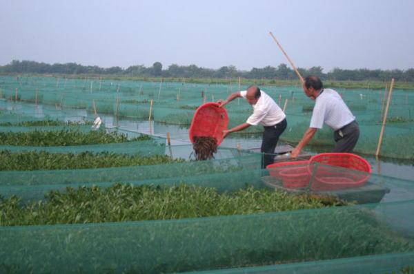 黄鳝养殖越冬期管理要做好四方面关键工作