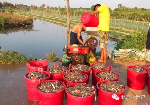 黄鳝养殖新手必读:黄鳝的生活习性
