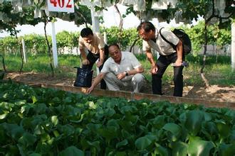 苏州农民王忠华葡萄架下养黄鳝 循环养殖效益高