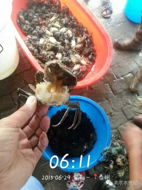 河蟹池塘里水瘪子的处理方法分享