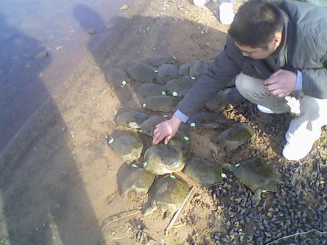 养殖过程中甲鱼爬坡的主要原因和处理方法