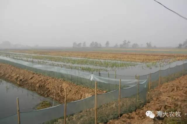 湖北地区几种淡水小龙虾养殖模式详解