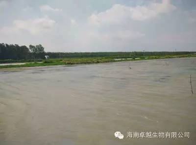 湖北潜江一位小龙虾养殖户成功经验分享