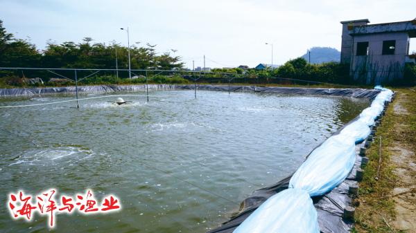 养殖斑节对虾连续五年成功的秘诀:最高亩产值五万块