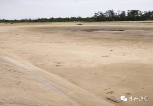 浅谈日本对虾高位池养殖技术