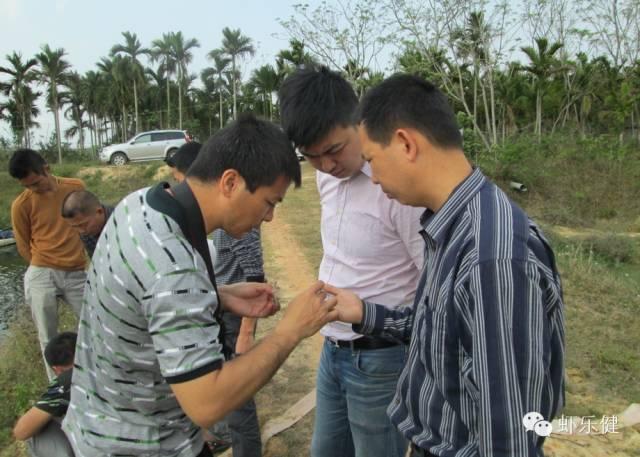 中毒和感染是现在对虾频频发病的两大主要原因