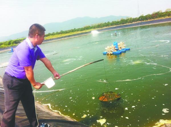 南美白对虾池塘养殖前期准备大汇总