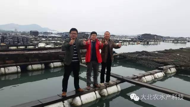 """大北农千赢电子游戏平台助力福建东山篮子鱼成功避开""""超级寒潮""""的袭击"""