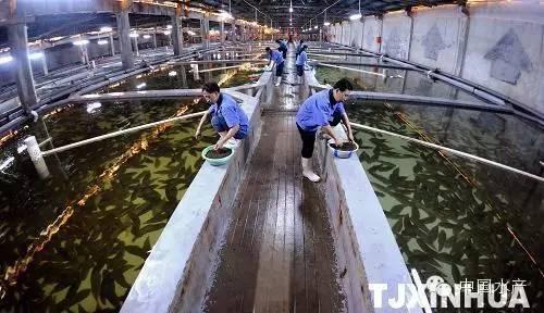 海水工厂循环水健康养殖技术及注意事项