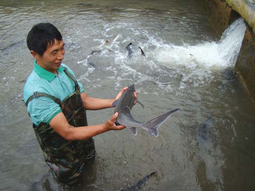浅谈鲟鱼养殖过程中溶氧与投喂管理技术