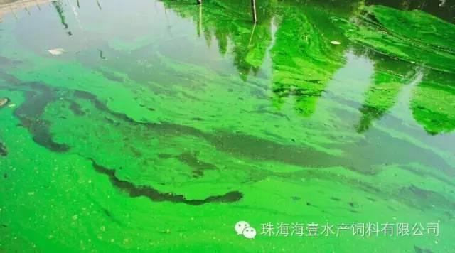 塘鲺鱼养殖塘水质如何才保持好