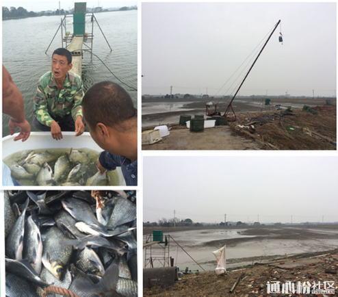 提高鳊鱼、花鲢养殖密度,饵料系数降低0.1