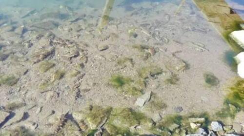 海参下礁晚的四个常见原因分析