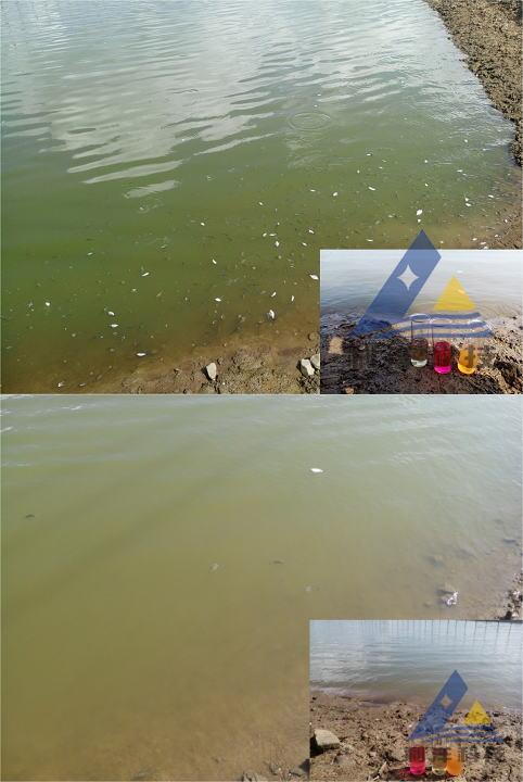 黑鲷、红鲉放苗后急性游水的处理方法