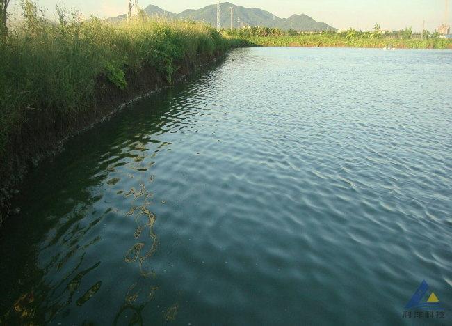 蓝藻毒素导致黄鳍鲷慢性中毒死亡的处理方法