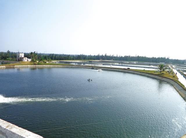 高位池养殖金鲳鱼的管理技术和病害防治方法