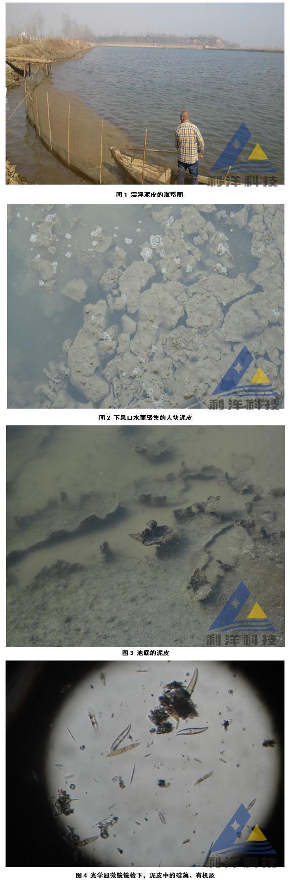 春季海蜇圈泥皮处理一例