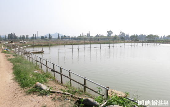 突破环境恶化难题,珠海海鲈鱼养殖亩产12000斤